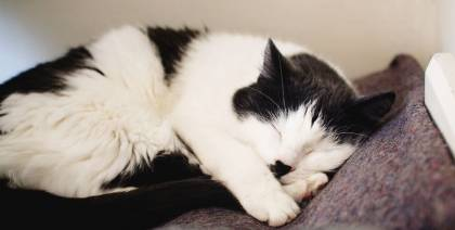 Cat sleeping in our Cattery in York