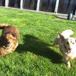 Small Dogs at Snowlandia Video
