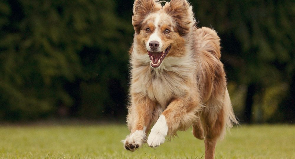 dog-test2
