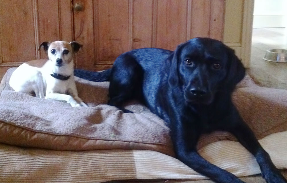 2-dogs-bed