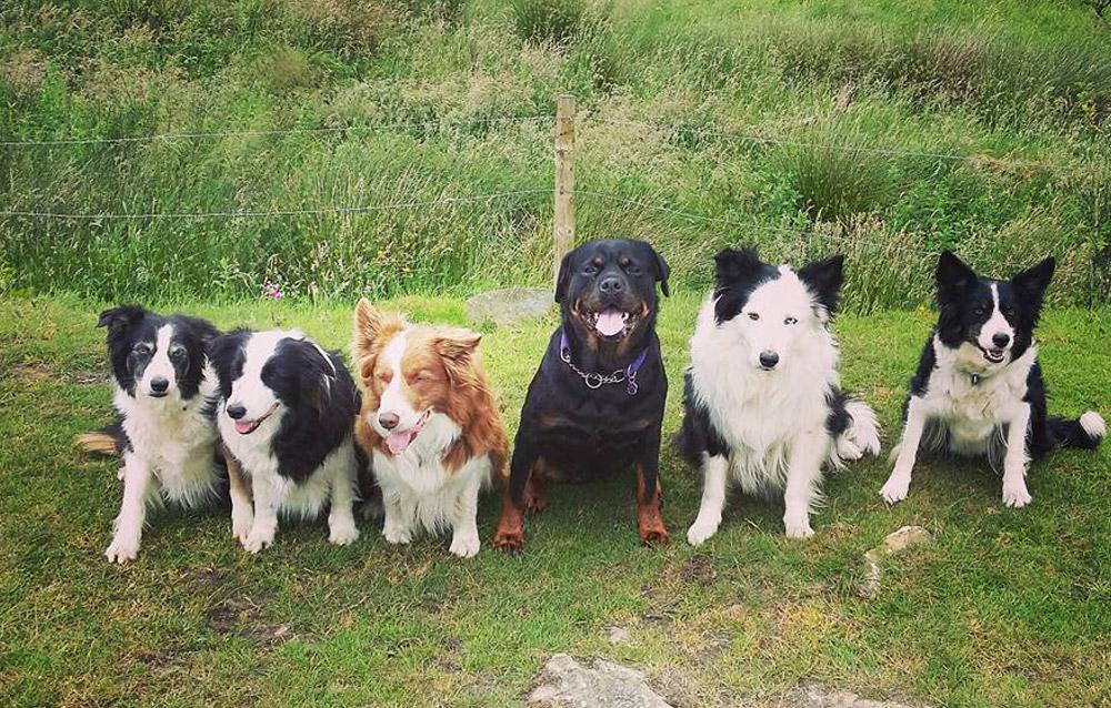 dog-training-4