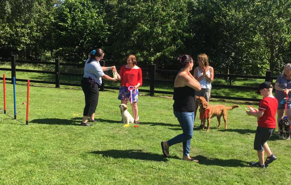 dog-training-5